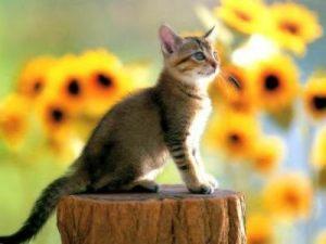 photos-de-chats-et-de-chatons-lea36020090420013402